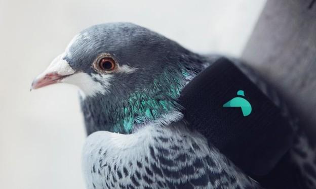 Pigeon-Air-Patrol